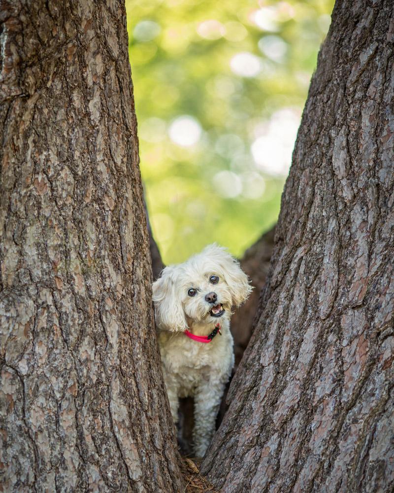 Dog Photo Maudslay State Park