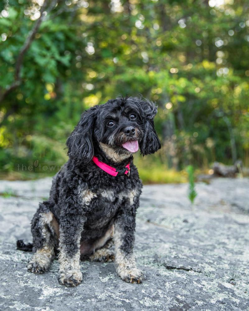 Head Tilts Pet Photography