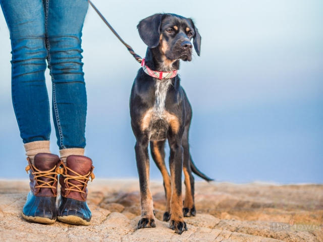 Sunrise pet photography photo session in Rockport, MA
