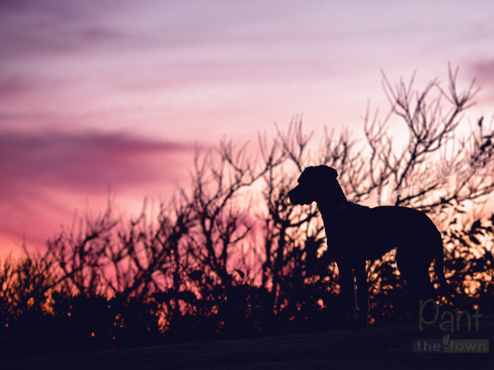 Silhouette image, rule of thirds