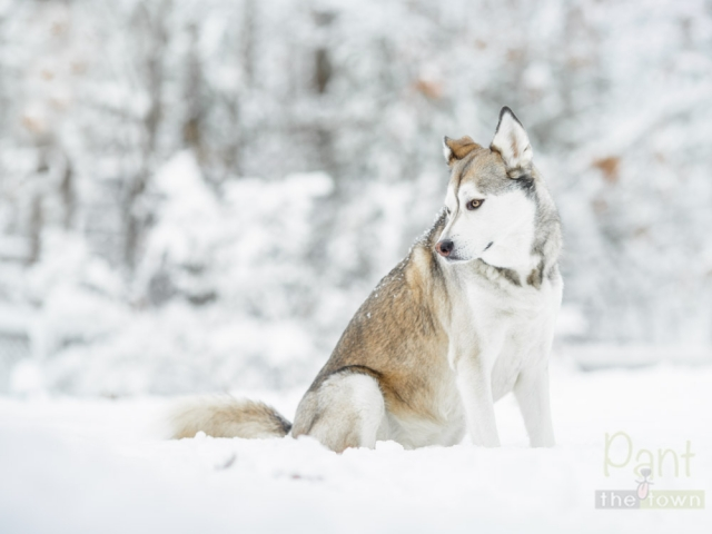Professional Pet Photography Snow Session Massachusetts