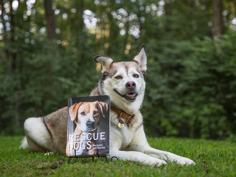 Rescue Dogs by Susannah Maynard