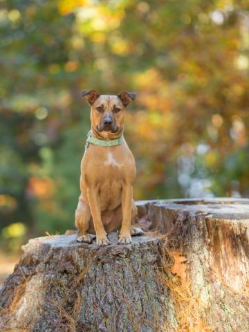 Maudslay State Park pup on a stump
