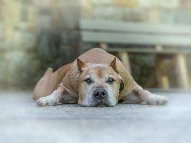 Winnekenni Castle Pet Photography Session