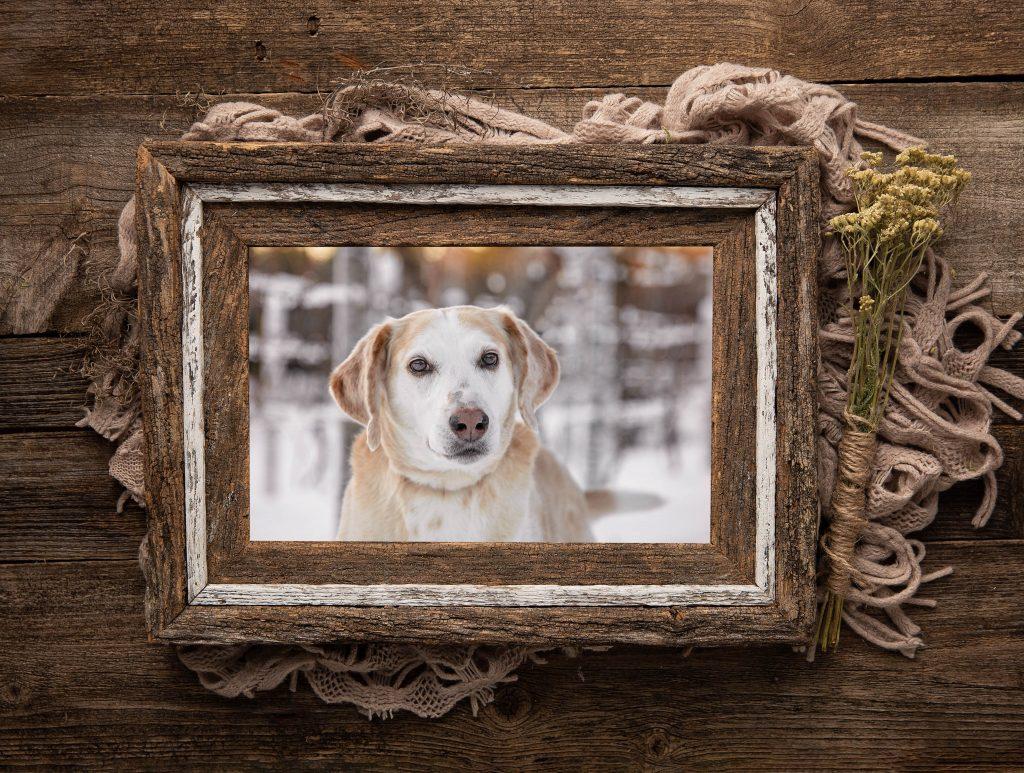 Winter Vineyard framed in rustic Barnwood