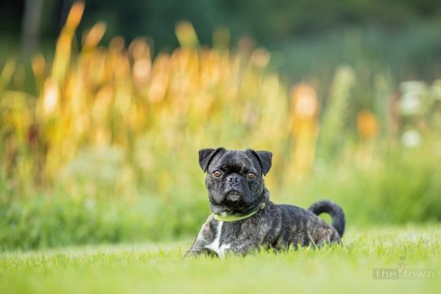 NH Pet Photography