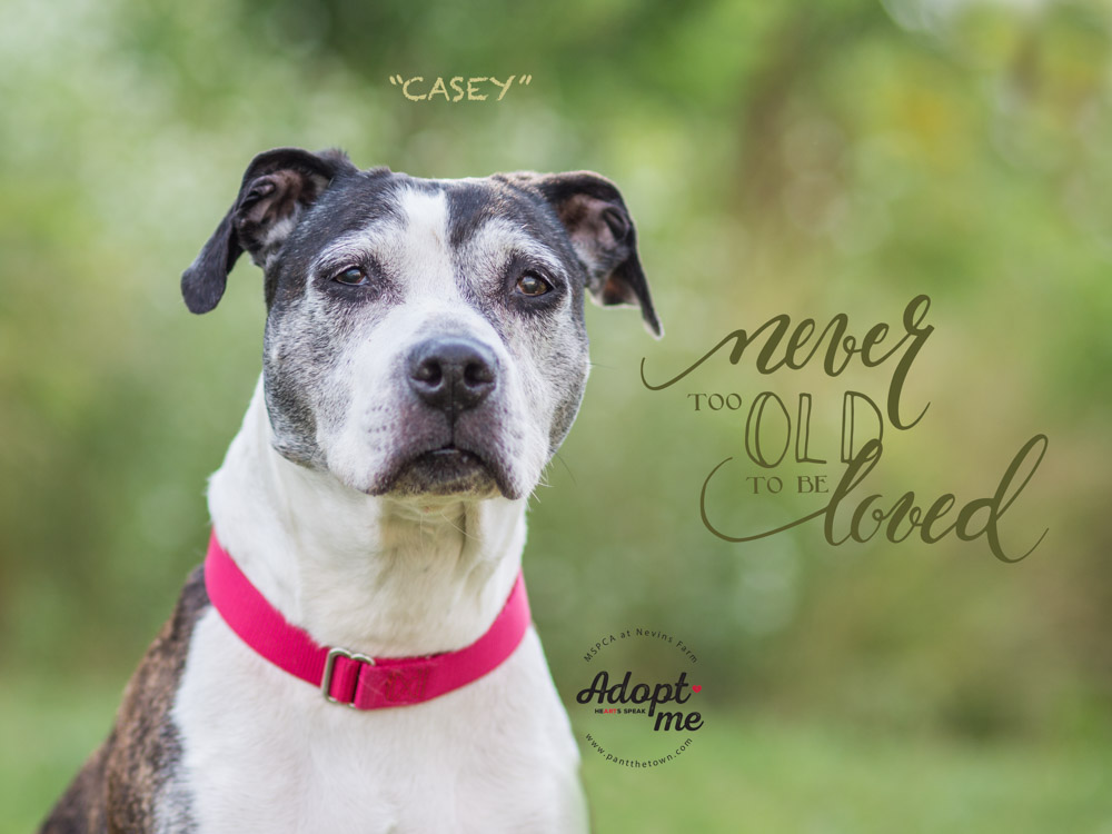 Senior dog adopted from the MSPCA