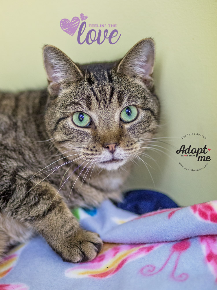 Photographing adoptable cats