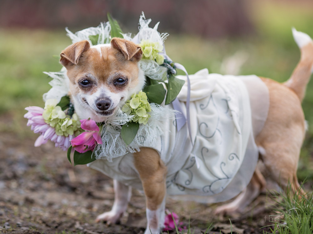 Emma rocking her wedding dress and flower crown during a dog wedding ceremony