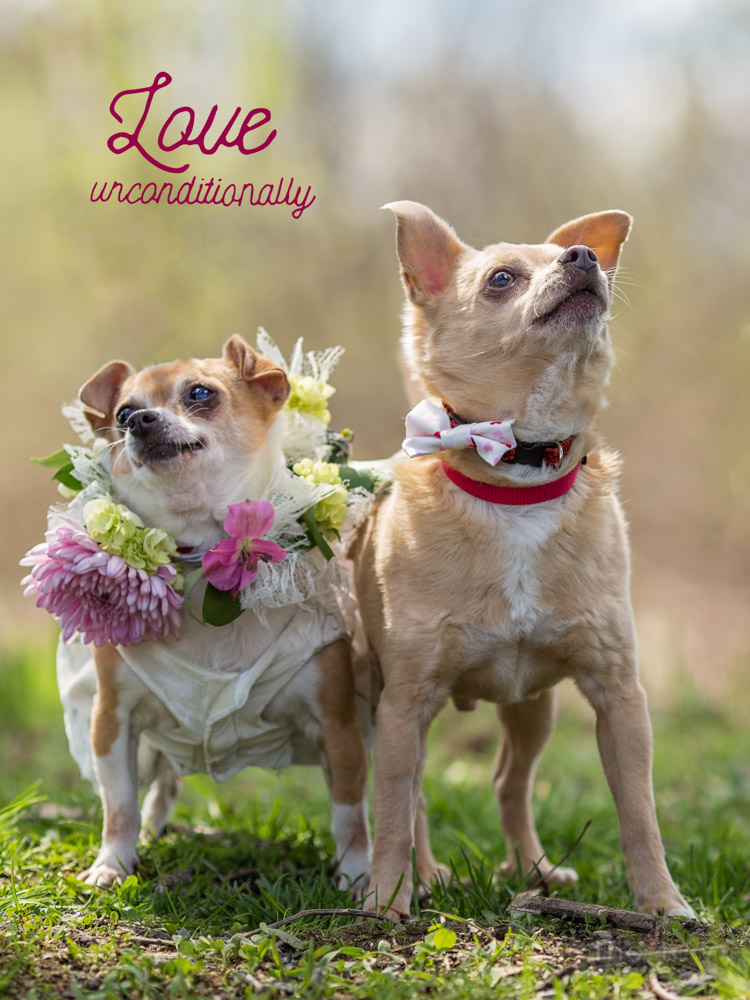 Bride and Groom dogs, Max and Emma, posing during their wedding ceremony