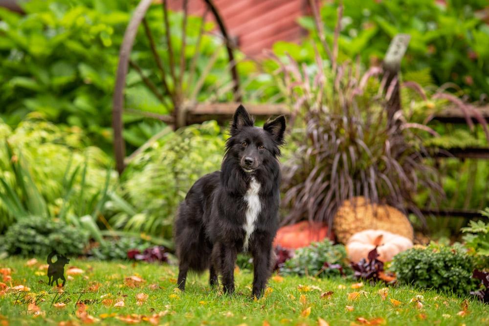 Endicott Park Dog Photo Session