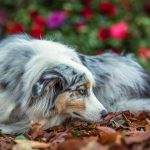 Photographing dogs in wineries