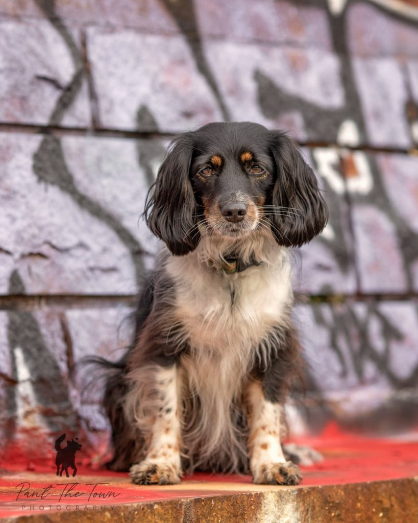 Adorable dog sitting in front of a graffiti wall