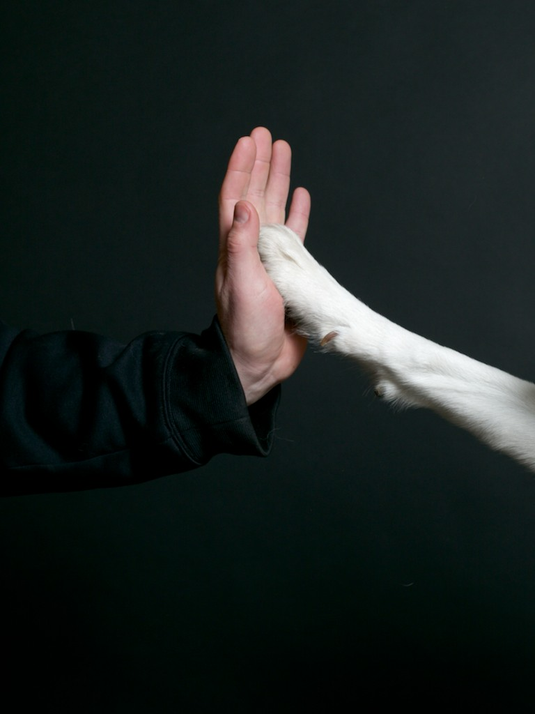 Paws High Five