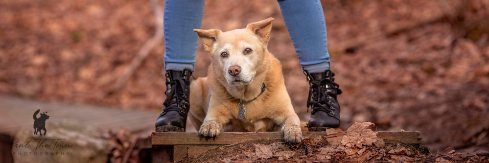 Dogs and Boots
