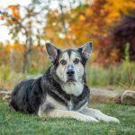 Best of 2018 Pet Photos