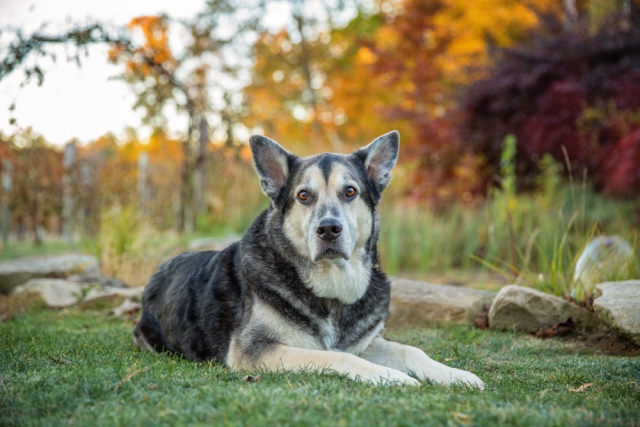 Memory Pet Photography Session at Zorvino Vineyards
