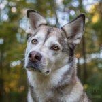 MA Pet Photography