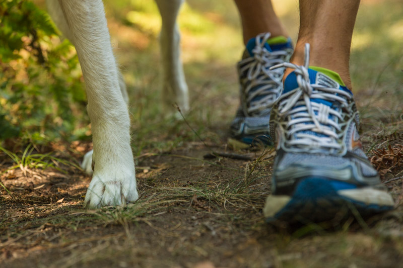 Paws and feet on the trail!