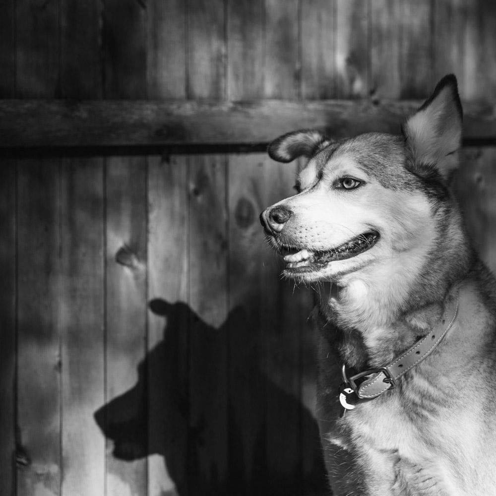 Shadows Pet Photography