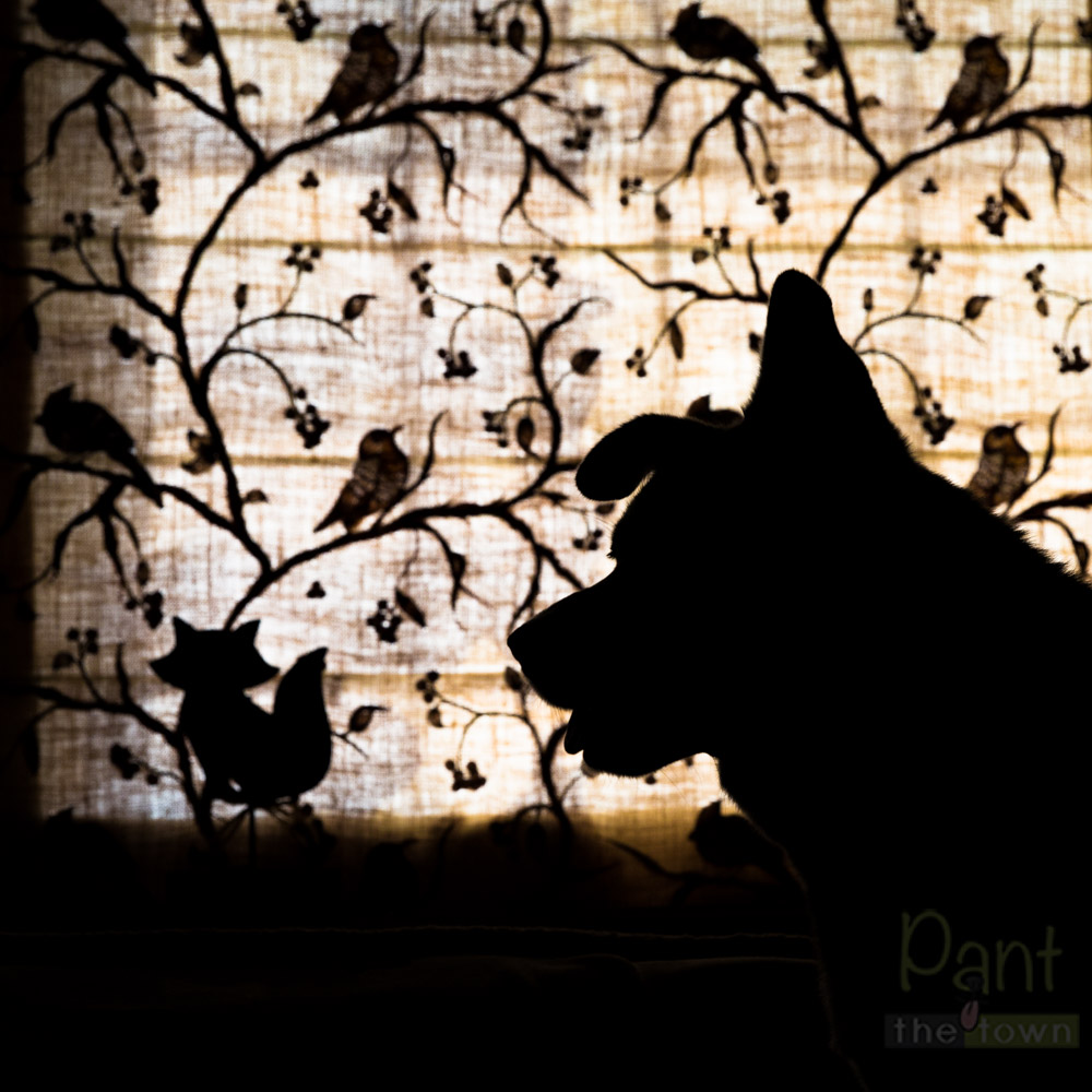 Silhouette Pet Photography