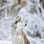 Photographing dogs in snow
