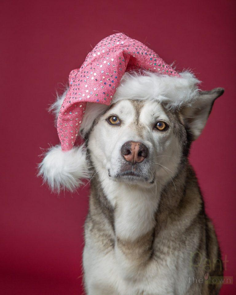 Holiday Pet Photos