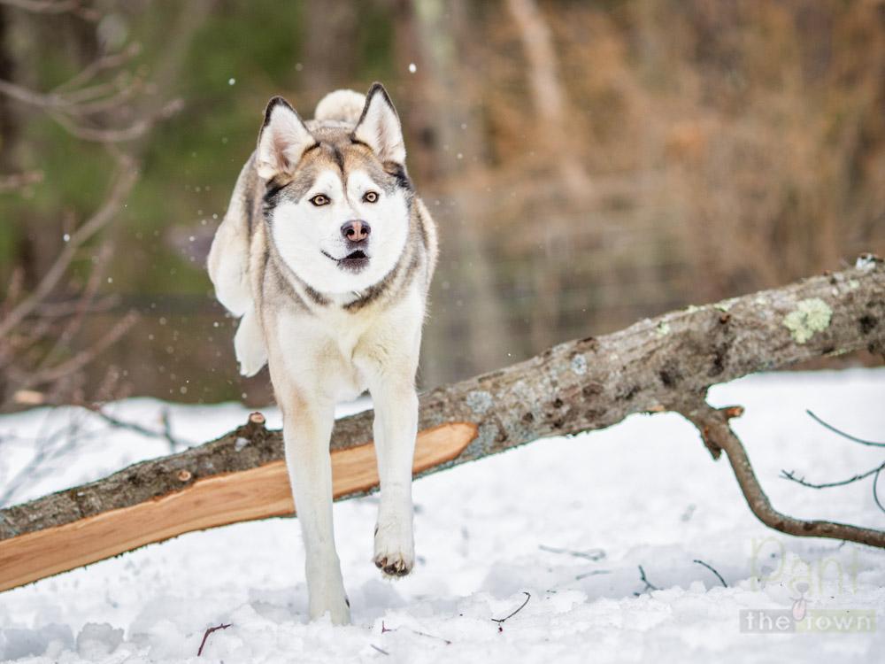Wintertime Snow Dog
