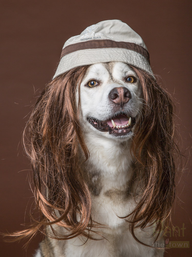 Dog in a wig with a bucket hat