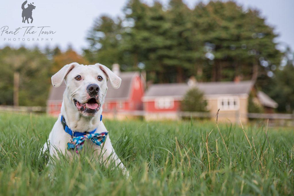 Deaf Dog posing on a farm
