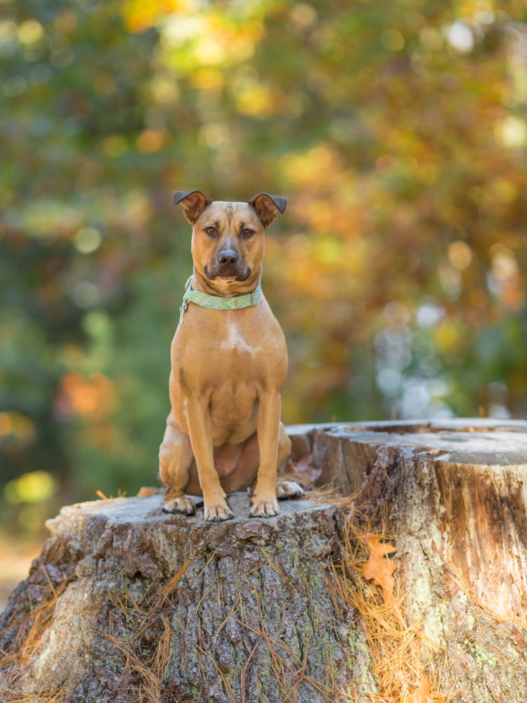 Maudslay State Park pup on a stump