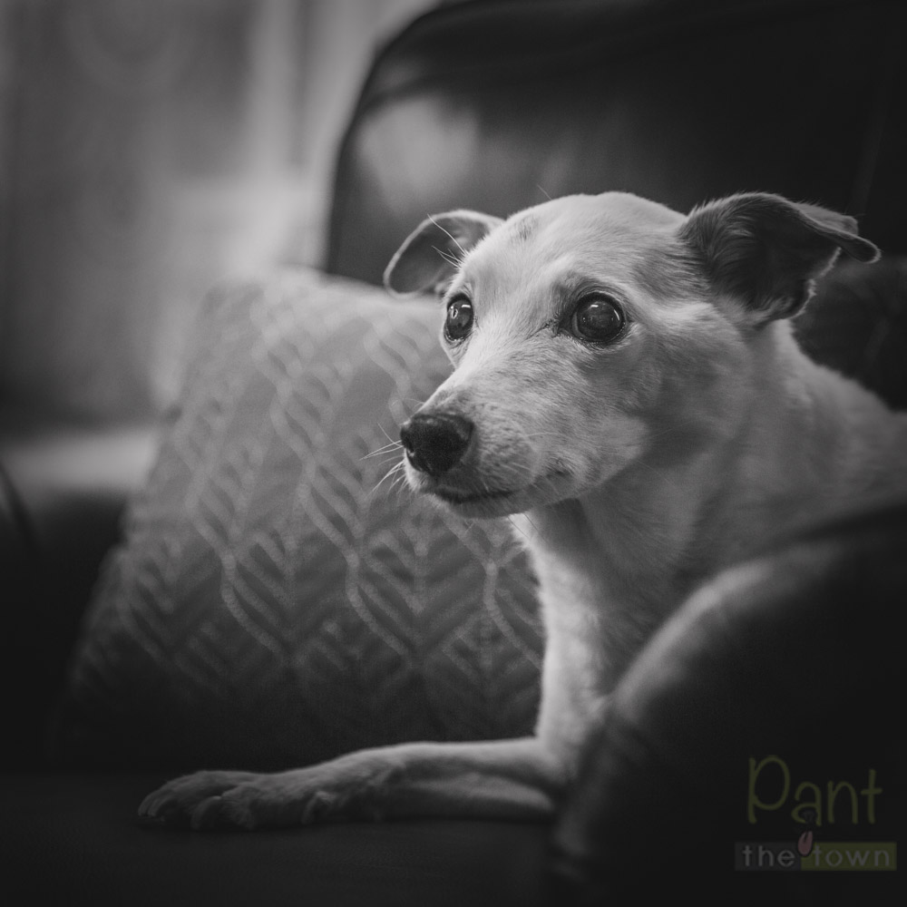 Memory Pet Photography Sessions