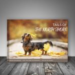 Tails of the North Shore Book Project