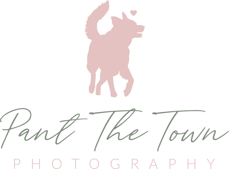 Pant the Town Photography logo inspired by rescued husky mix, Kota