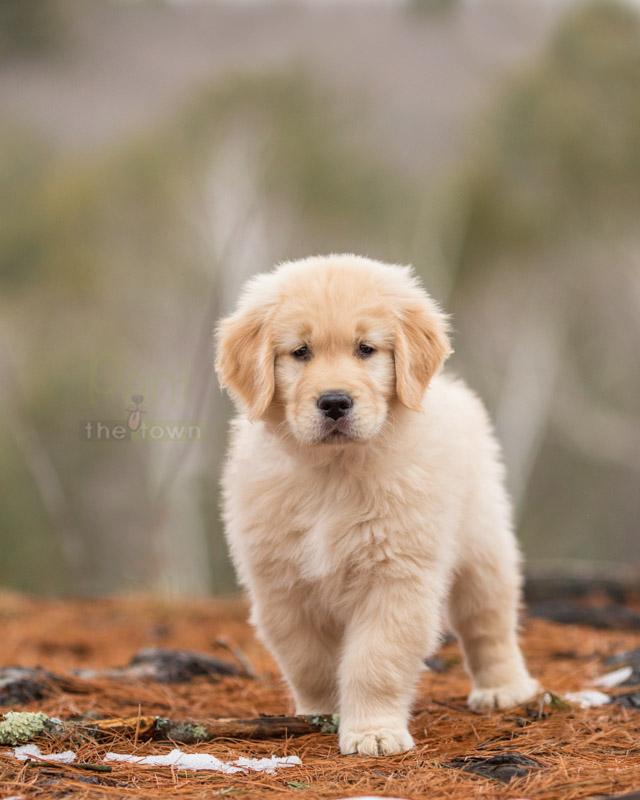 Puppy model