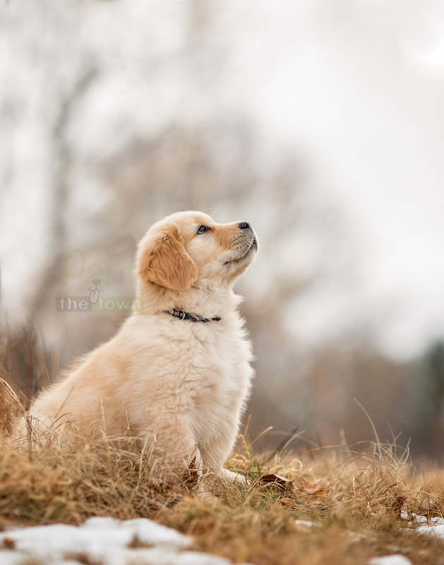Puppy photo session in Newburyport