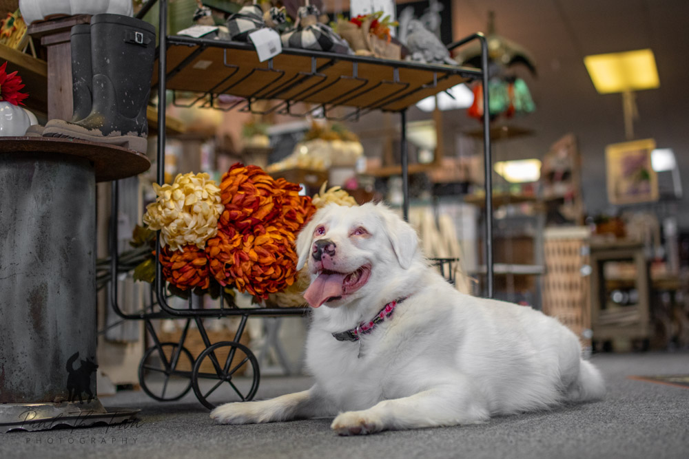 Photographing a blind and deaf dog
