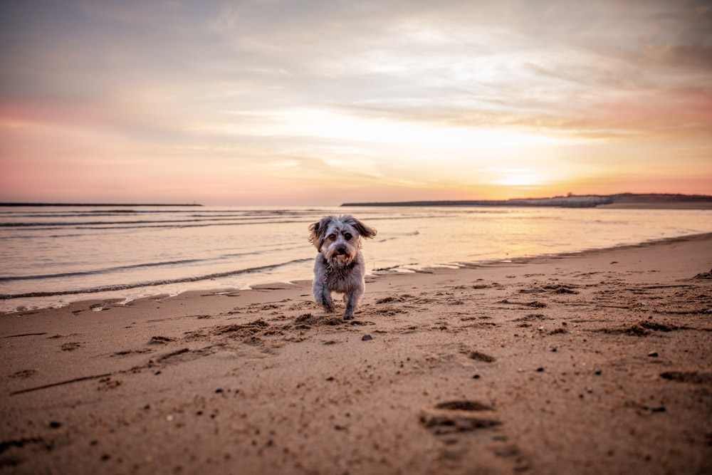 Sunrise at Plum Island Beach