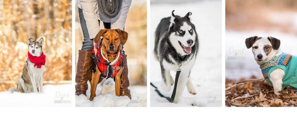 Winter Wonderland Dog Photo Sessions