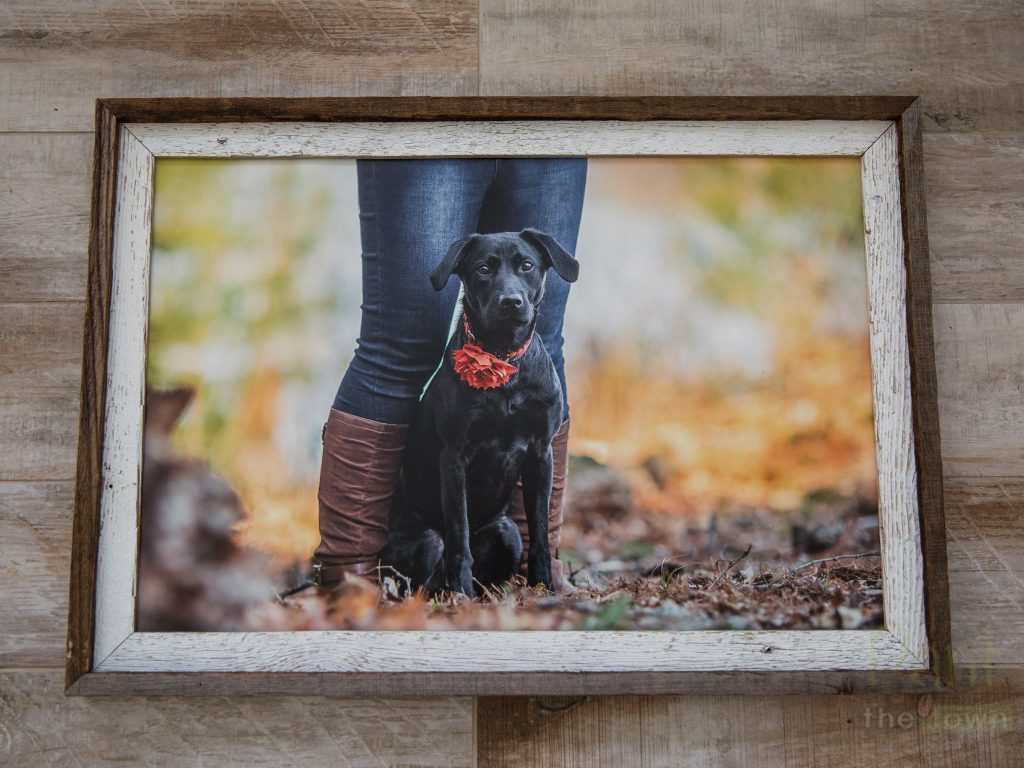 Barnwood Framed Print from Pant the Town