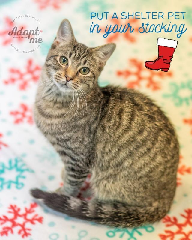 Adoptable Cat NH