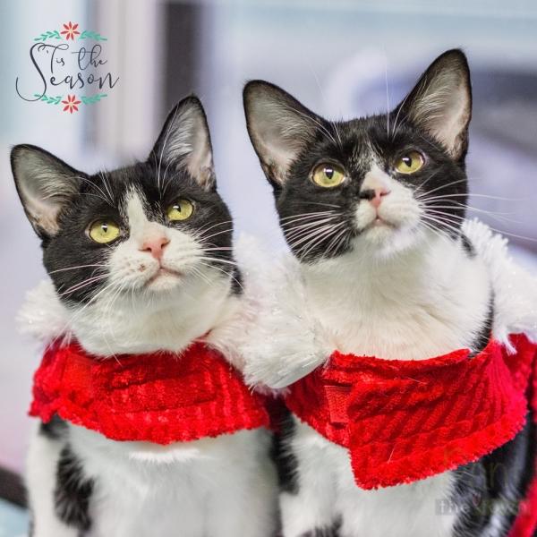 Holiday Pet Portraits Cat Tales Rescue