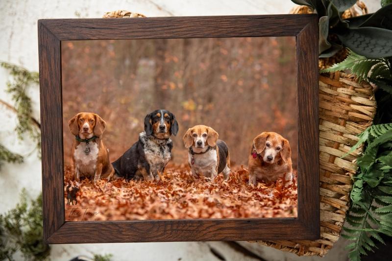 Walnut framed print of