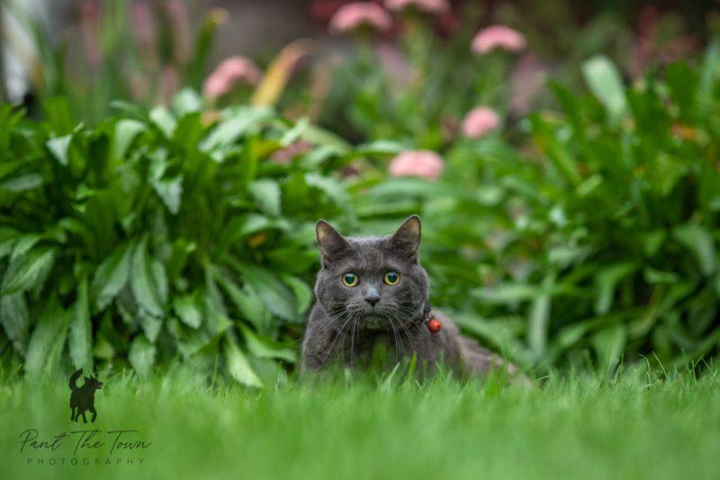 Cat Photo Session at Endicott Park