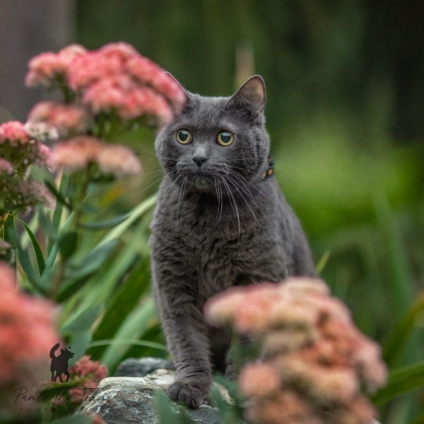 Cat Photo Session in the Park