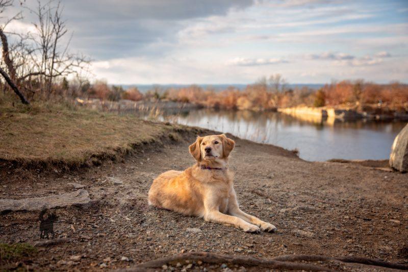 Irresistible Dog Photos Scenic