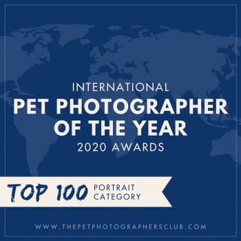 Top 100 pet photographers