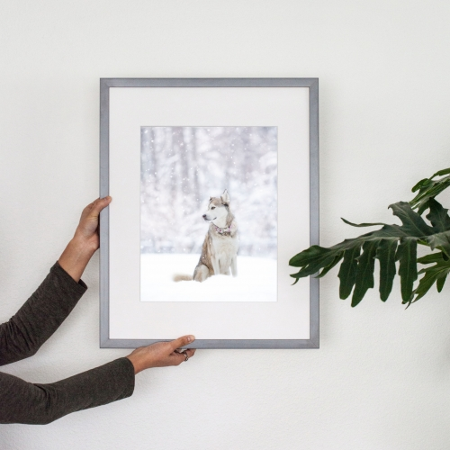 Custom framed portrait of a husky mix in snow