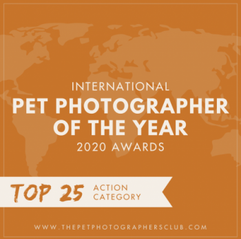 International Pet Photographer of the Year