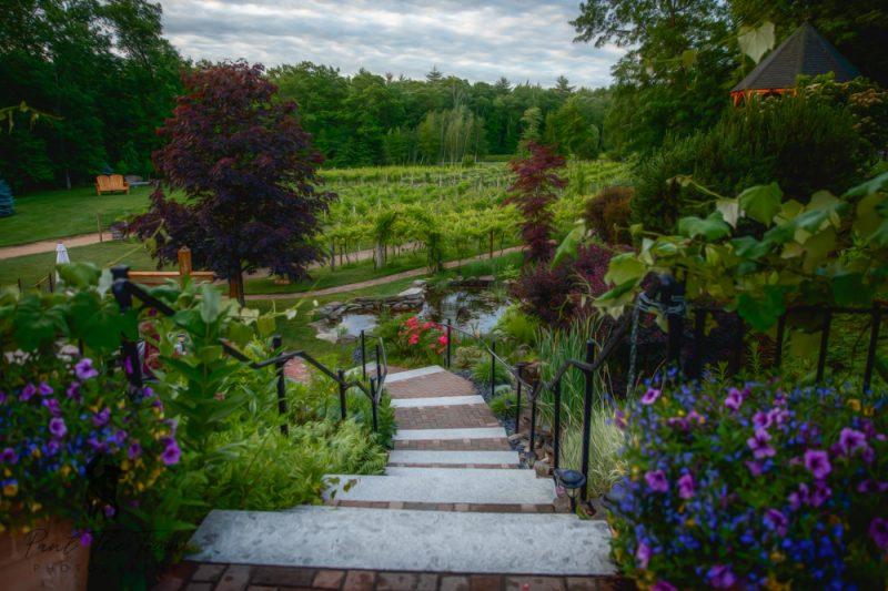 Vineyard Blooms